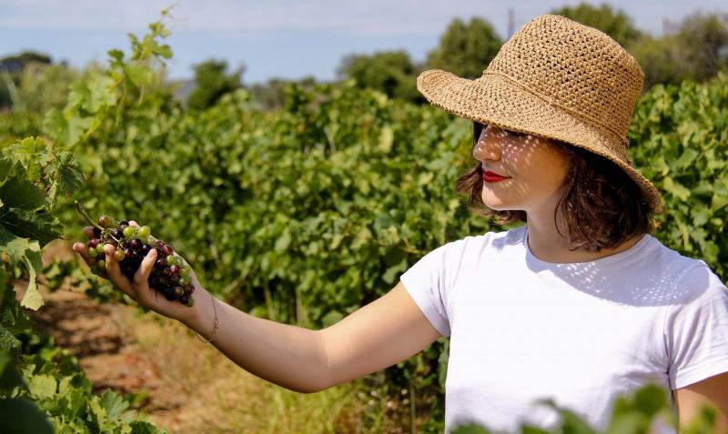 Vinos, moscateles y vermut