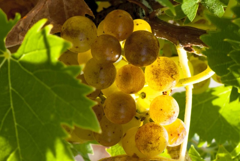 800x600-raisins-ville-frontignan-fr-5124461-1-1186