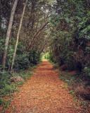 Chamanita_sorties_nature_5