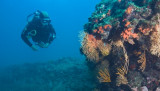 Plongée-passion-coraux