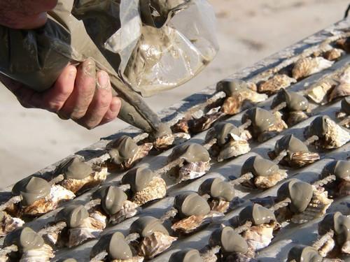 collage des coquillages réduit
