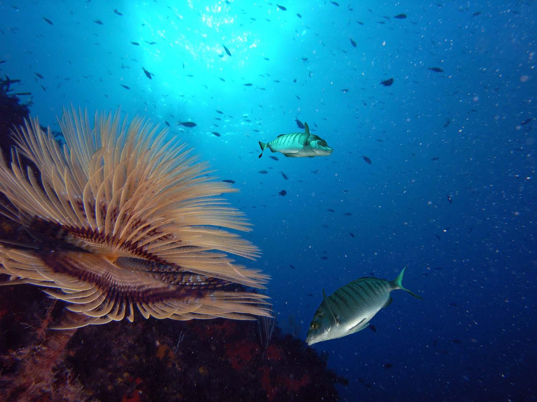 Fonds marins de l'archipel de Thau