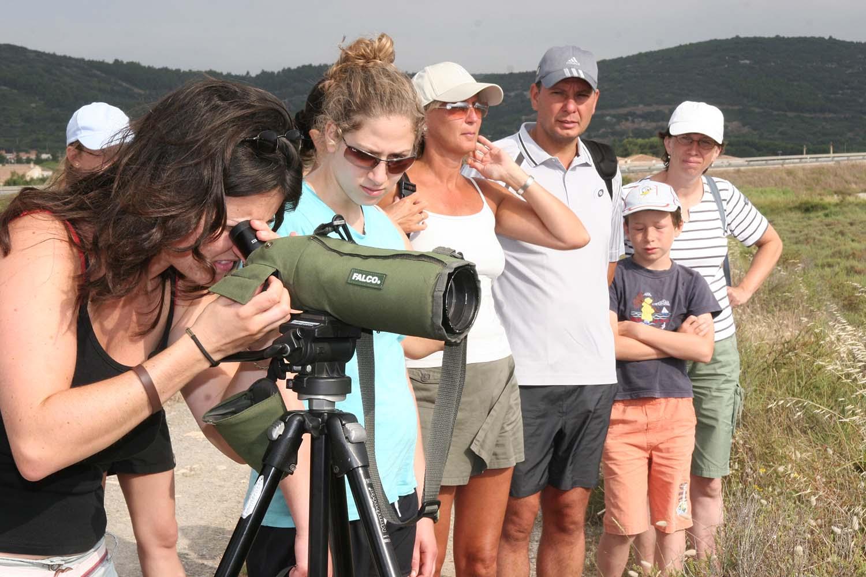 Observation des oiseaux - © OT Frontignan