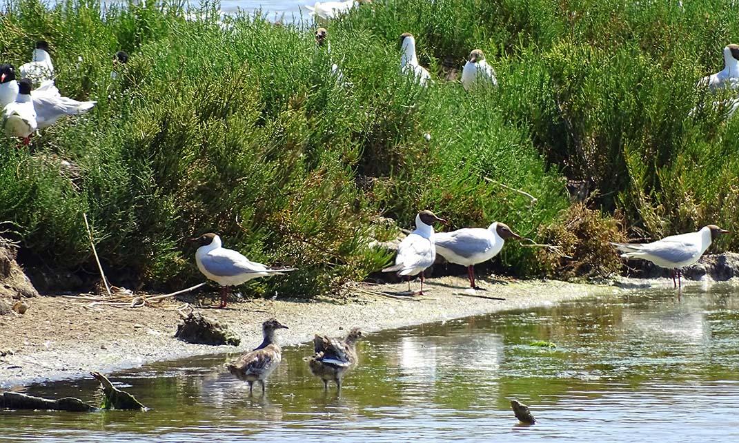 Observation des oiseaux dans les salins - © OT Frontignan
