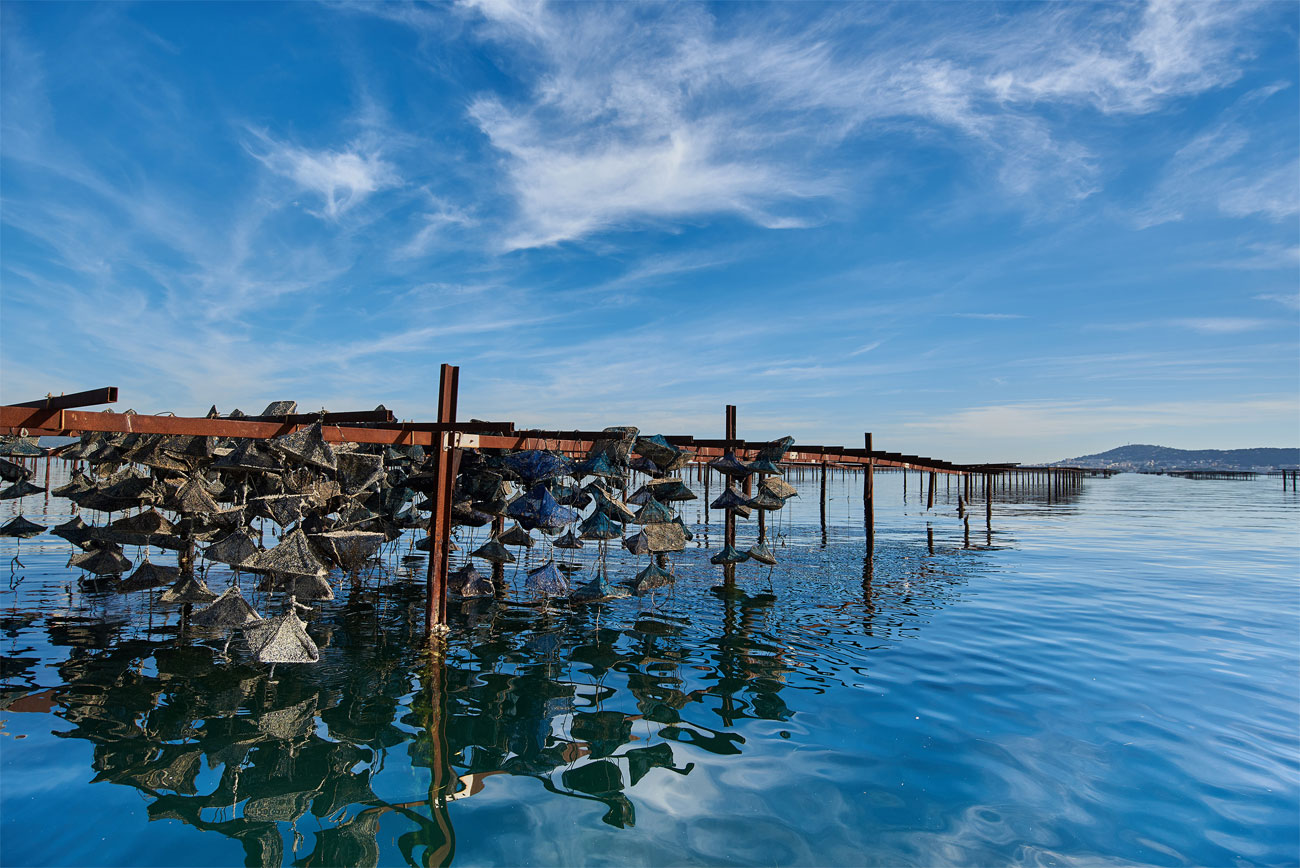 Parc à huître - Bassin de Thau