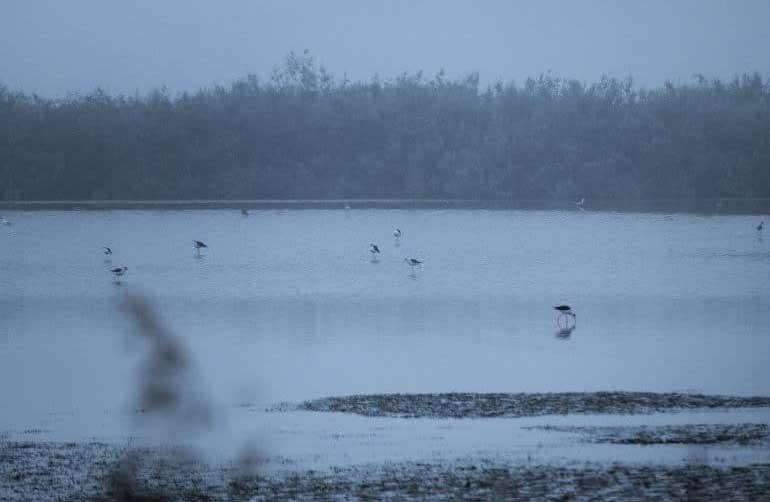 reserve-bagnas-nature-archipel-thau-sete-marseillan